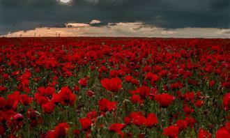 מהו הפרח של הנשמה שלך: שדה פרחים