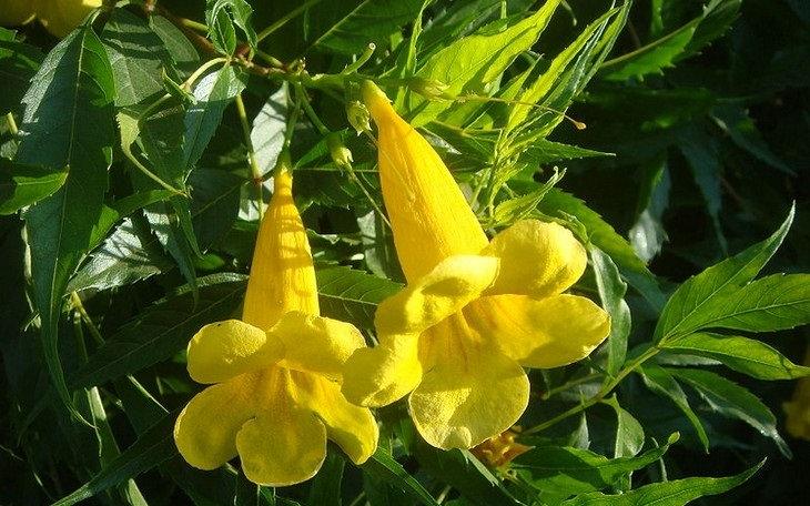 פרחים מדבריים: דק פרי זקוף