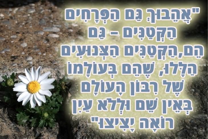 """ציטוטי שירי שאול טשרניחובסקי: """"אהבוך גם הפרחים הקטנים - גם הם,הקטנים הצנועים הללו, שהם בעולמו של ריבון העולם באין שם וללא עין רואה יציצו"""""""