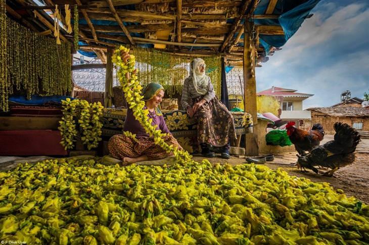 תחרות צילום מזון 2021: נשים תולות במיה לייבוש