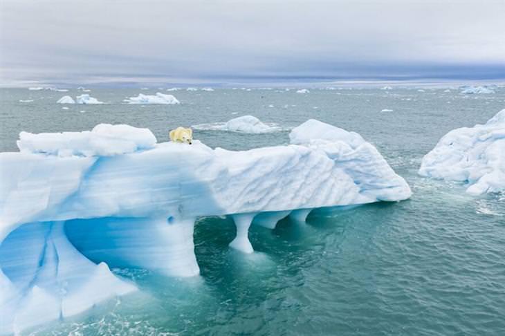 תמונות זוכות מתחרות צילומי הרחפן 2021: דוב קוטב צד על קרחון