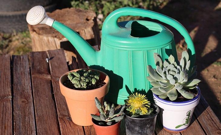 מדריך לגידול סוקולנטים: סוקולנטים ומשפך לגינה