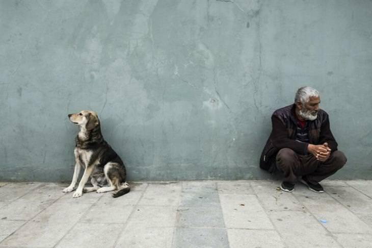 תחרות צילום אורבנית: חסר בית וכלב רחוב מפנים מבטם אחד מהשני