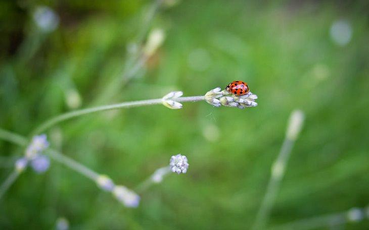 תכונות של אנשים עם שאיפות גבוהות: חיפושית על צמח