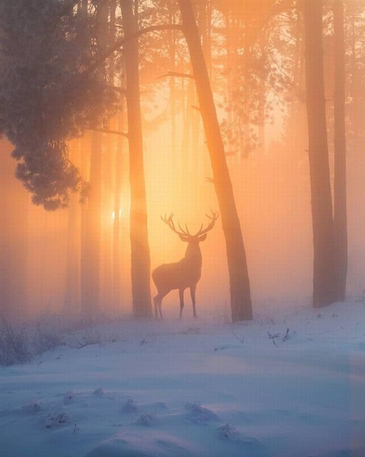 נופים יפים מרחבי העולם: אייל מוסתר חלקית בערפל