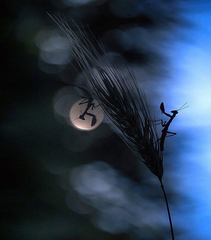 תחרות צילום של אומנות בטבע: גמלי שלמה על שיבולת