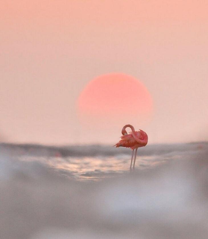 תחרות צילום של אומנות בטבע: פלמינגו