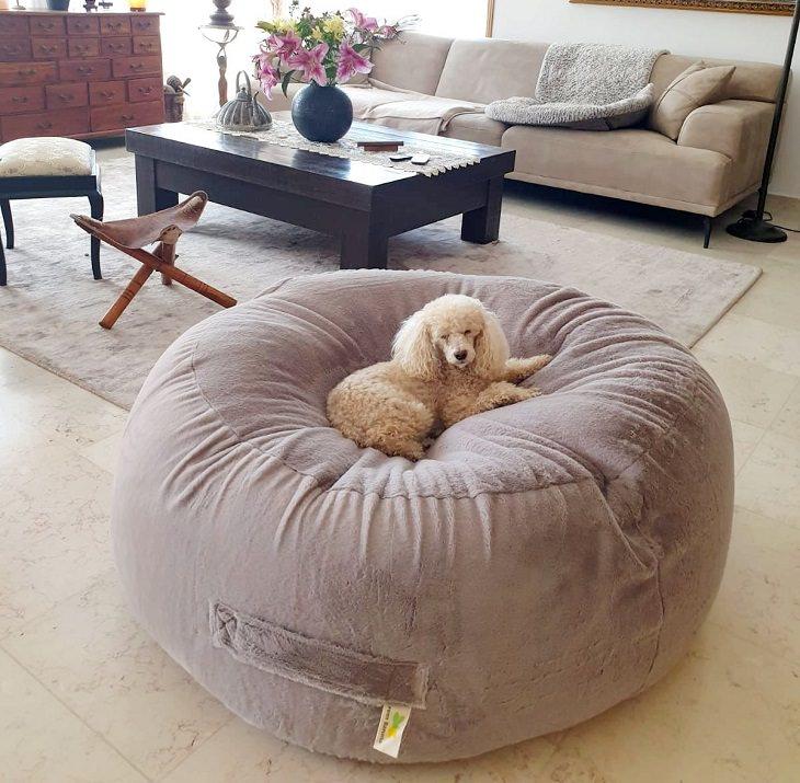 פופים לבית: כלב על פוף בסלון