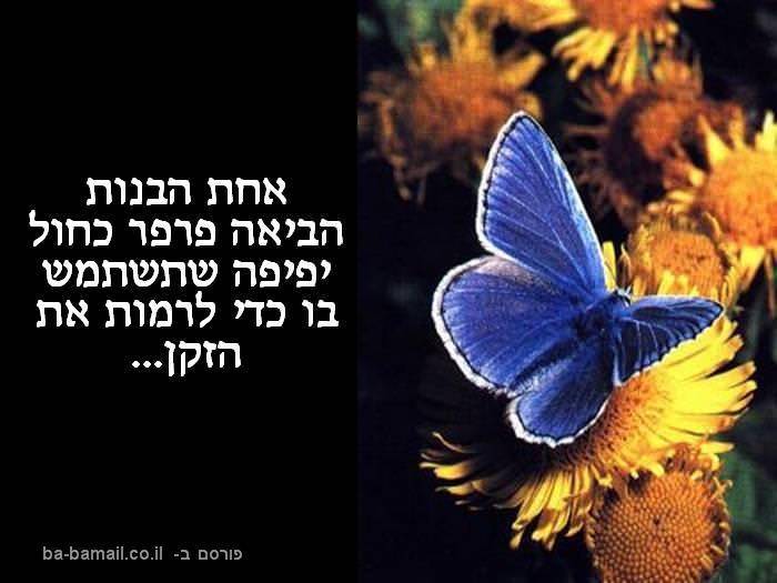 הפרפר הכחול