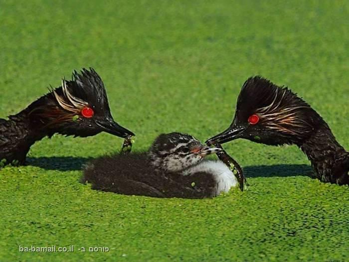 הציפורים שתראו רק במזרח הרחוק