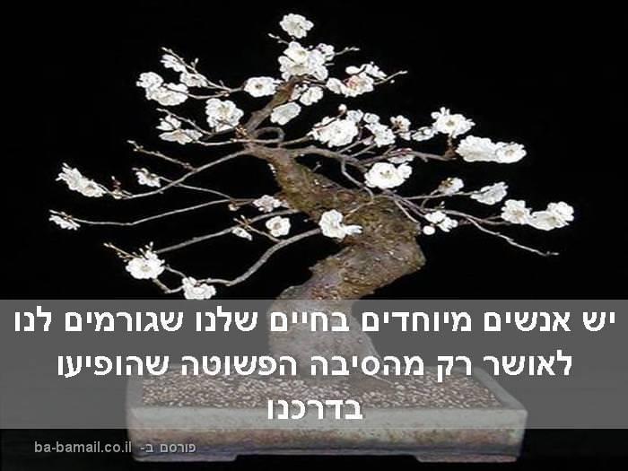 עץ הידידים שלי