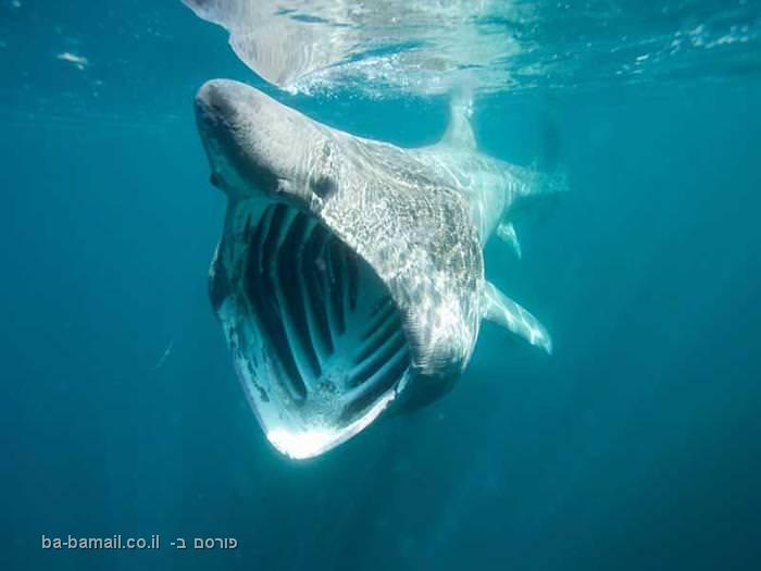 ים, מים, כריש