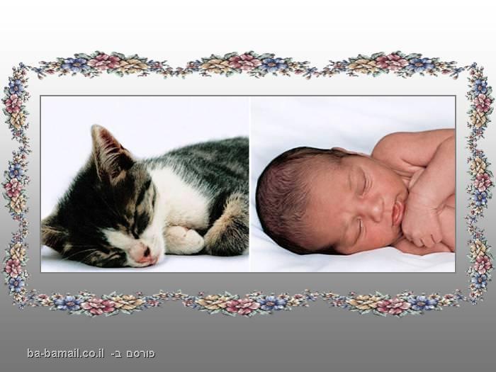 דמיון, בעל חיים, תינוק, חתול, לישון