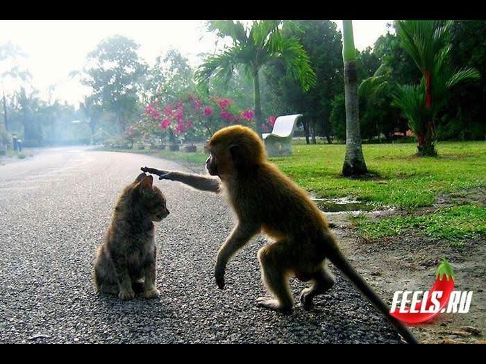 החיות לא צריכות יום מיוחד לאהבה