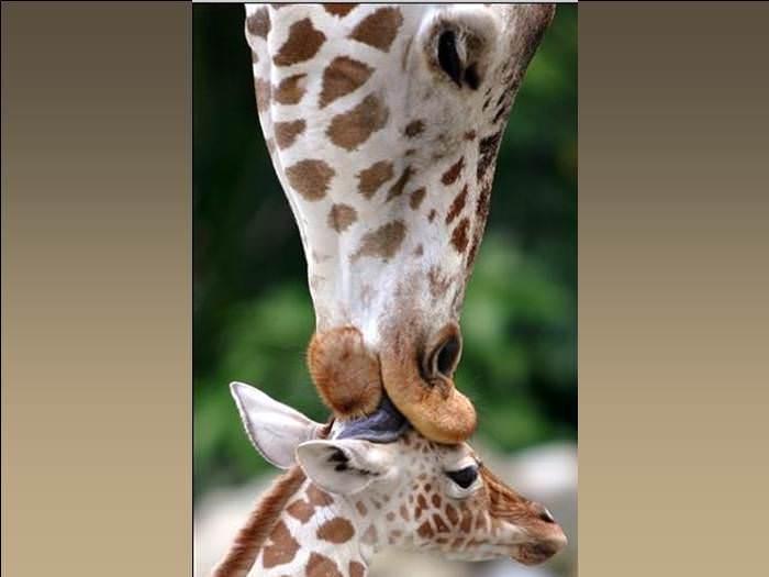בכל הטבע יודעים שאמא יש רק אחת