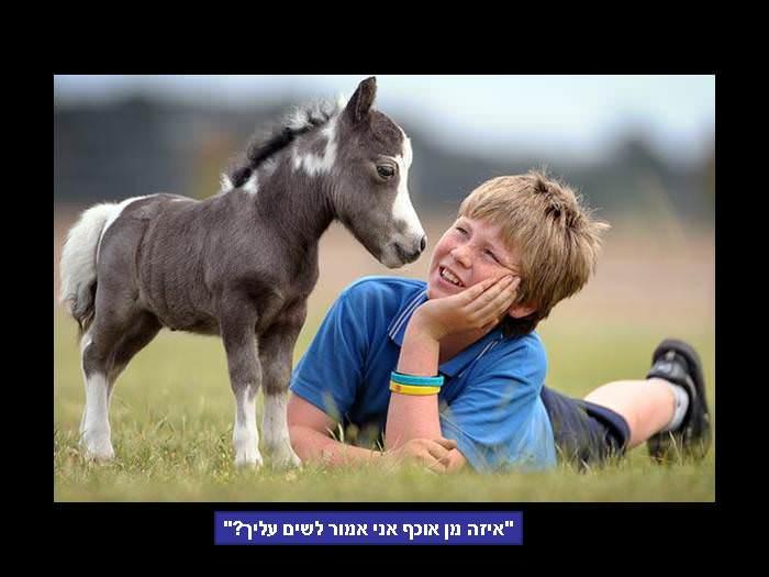 הומור מן החי - חיות במצבים מצחיקים!