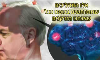 המדע שמאחורי ההזדקנות - מדריך אינפוגרפי