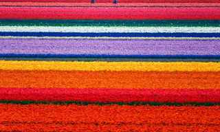 כל הצבעים כולם - טבע מדהים!