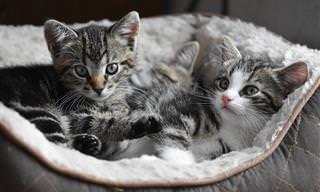 9 דרכים מגובות מדעית לגרום לחתול שלכם לאהוב אתכם יותר
