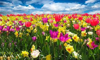 20 שירים שיכניסו אתכם לאווירת האביב