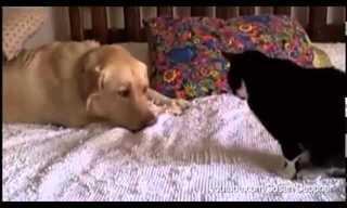 מה קורה כשכלב מנסה להתיידד עם חתול?