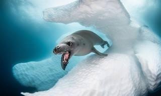 """14 תמונות מדהימות מ""""תחרות אמנות האוקיינוס"""" 2019"""