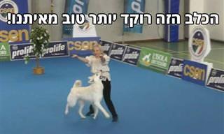 אתם מוזמנים להכיר את לשה - כלב הפלא שרוקד יותר טוב מכם!