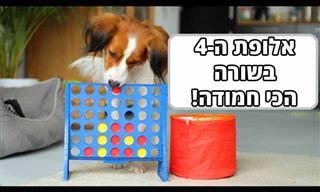 כלבה חמודה משחקת 4 בשורה