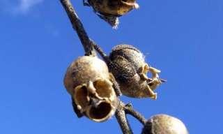 צמחים מדהימים והזרעים מהם נבטו