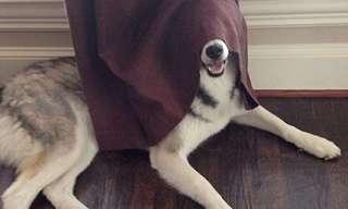 סדרת תמונות של כלבים מצחיקים משחקים מחבואים