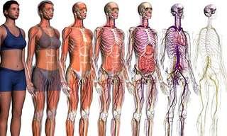 17 עובדות מרתקות על הגוף האנושי