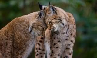 18 תמונות מיוחדות של רגעי אהבה נדירים בין חיות