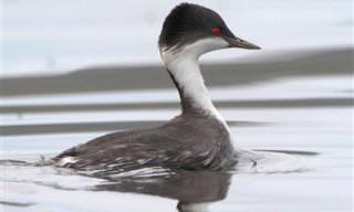 15 ציפורים נדירות שרק מעטים זכו לראות