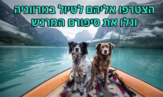 תמונות של כלבים עם סיפור מרגש, שמטיילים ברחבי נורווגיה