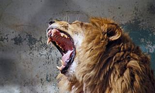 איך המזל האסטרולוגי משפיע על התבטאות הכעס