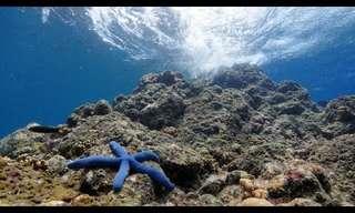 סרטון טבע מופלא של שונית האלמוגים בבאלי
