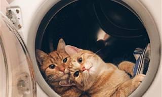20 תמונות מצחיקות במיוחד של זוגות חתולים