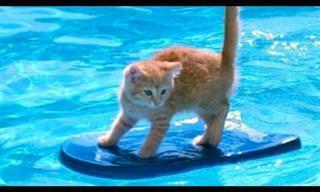 חיות מחמד במפגש קורע עם בריכת השחייה