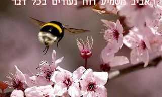 """איך יודעים שבא אביב? משפטים מקסימים!המצגת מלווה במוזיקה - מומלץ להדליק רמקולים.להפסקת המוזיקה לחצו על """"השהה"""".תמונה מקורית: April Rush"""