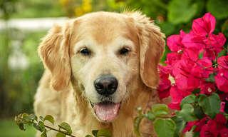 דוגמן על ארבע - הכלב שזכה בתחרויות צילום