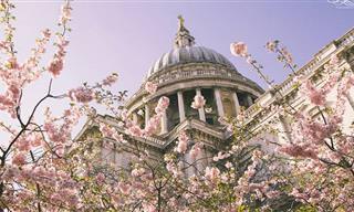 16 תמונות מקסימות של פריחות ברחבי לונדון