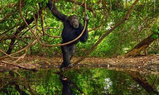 15 תמונות נפלאות של טבע פראי ומדהים ביופיו