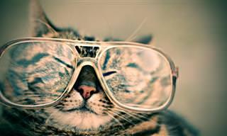 12 שיעורים משעשעים לחיים שאפשר ללמוד מחתולים