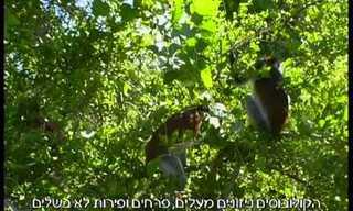 מסע קסם בשמורת יער ג'וזני