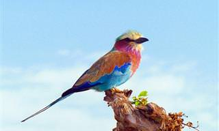 14 ציפורים אקזוטיות ומדהימות מרחבי העולם