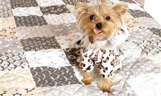 מדריך משעשע להכרת האופי של גזעי הכלבים השונים