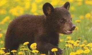 גורי דובים חמודים