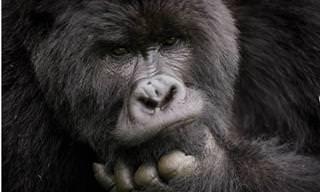 17 תמונות טבע מדהימות של הצלם ארז מרום
