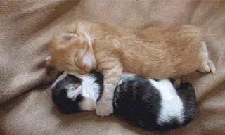 21 חיות ישנוניות וחמודות