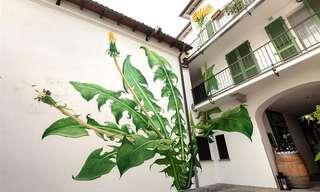ציורי הצמחים מהשתנים של מונה קארון